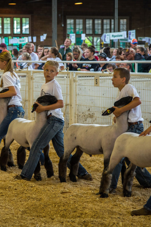 Young exhibitors displaying their sheep