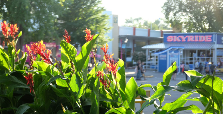 Flowers outside of the Skyride, showcasing the work of our greenhouse staff